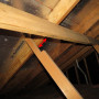 Damaged Roof Framing